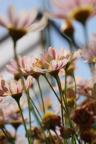 マイ工務店さんのエントランスの花。